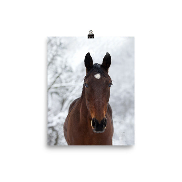 Winter Horse Wall Poster