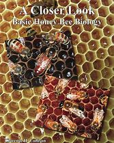 Basic Honey Bee Biology - A Closer Look