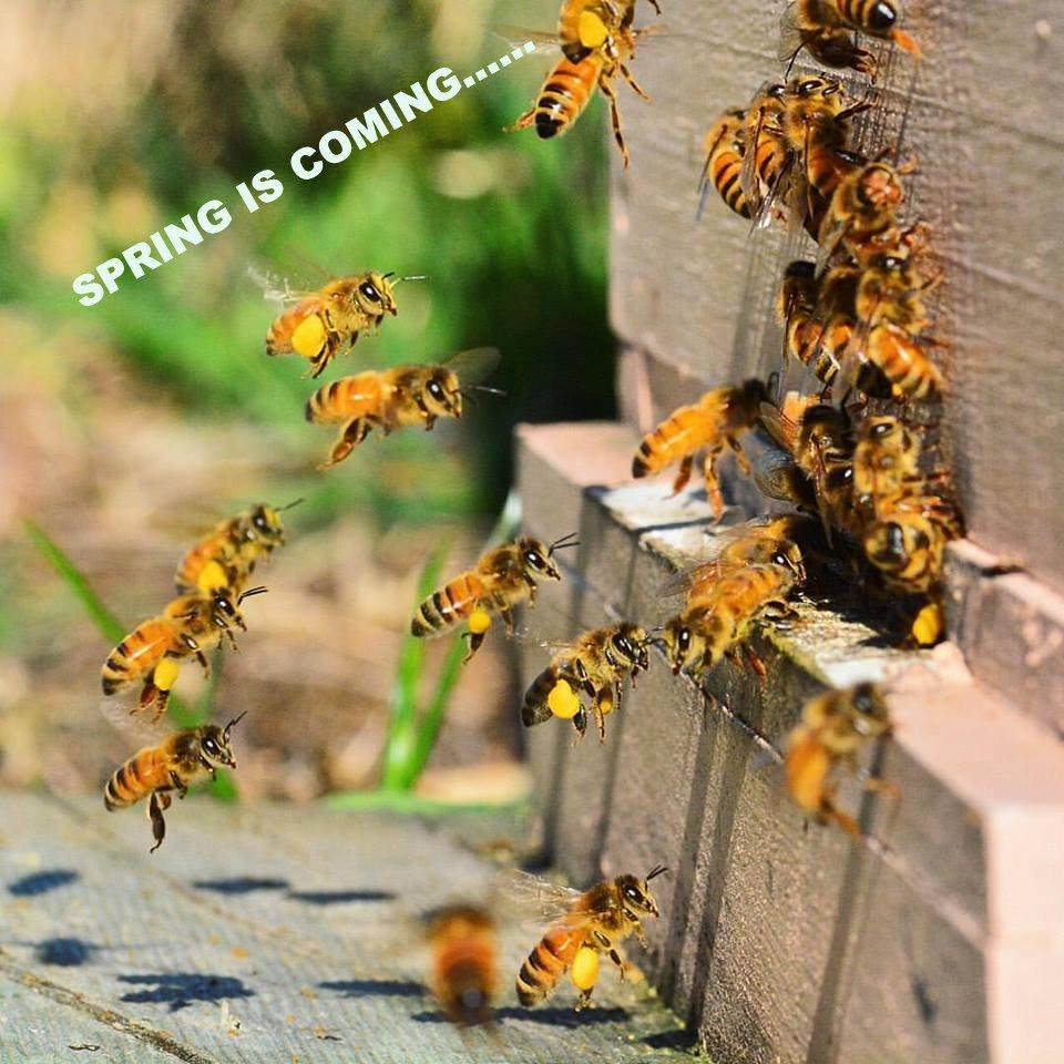 Lacelle's Apiary – Lacelle's Apiary Beekeeping Supplies
