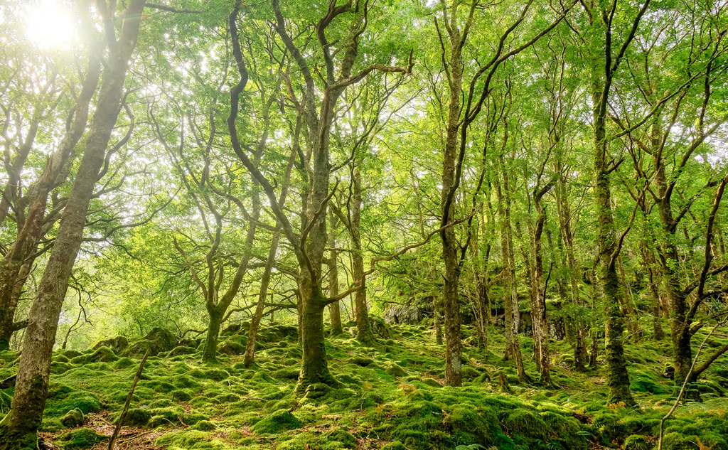 Welsh woodlands