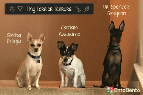 Entobento dog treats Tiny Terrior Terrors