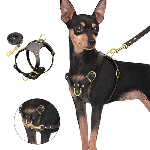 Dog Harness Vest & Leash Set