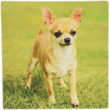 3dRose LLC 8 x 8 x 0.25 Inches Mouse Pad, Chihuahua (mp_414_1)