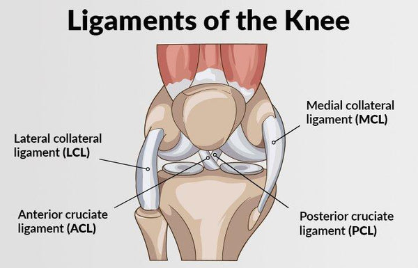 Causes & Prevention of Knee Ligament Injuries