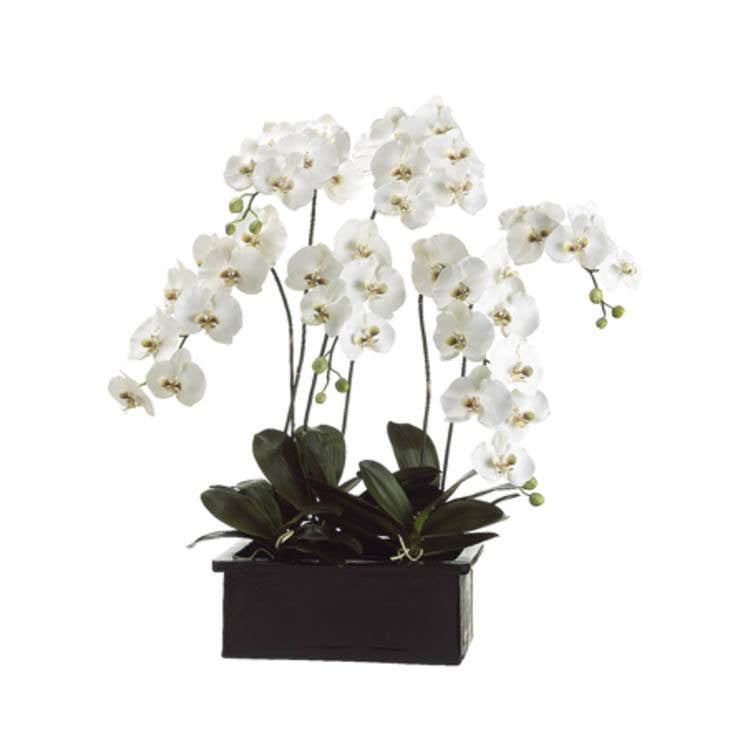 "Phalaenopsis Orchid~ White/Green - 42"" - Cece & Me - Home and Gifts"