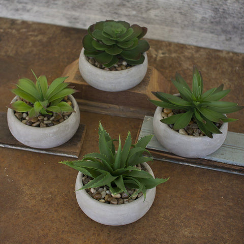 Artificial Succulents In Low Round Cement Pots (Set of 4) - Cece & Me - Home and Gifts