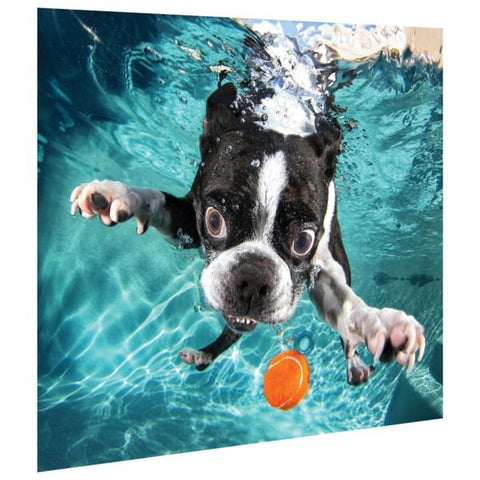 Image of Boston Terrier ~ Tempered Art Glass - Cece & Me - Home and Gifts