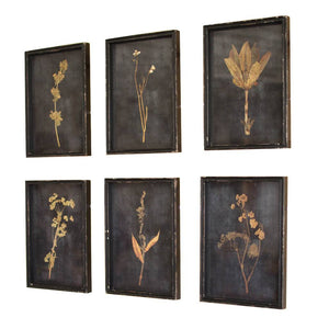 Botanical Prints Under Glass (Set of 6) - Cece & Me - Home and Gifts