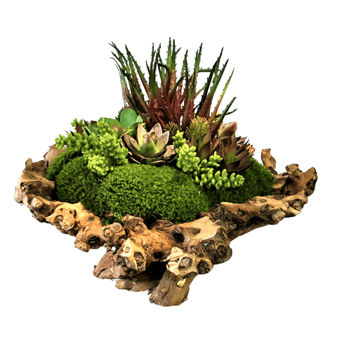 Branchy Succulent Bowl - Cece & Me - Home and Gifts