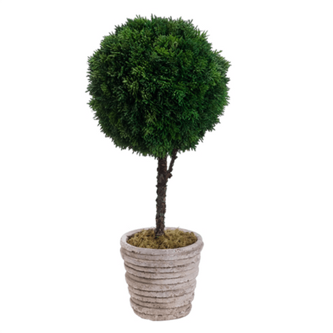 Cedar Ball Topiary in Cement Pot Green - Cece & Me - Home and Gifts