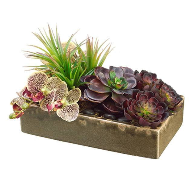 Echeveria/Orchid/ Yucca in Ceramic Container Burgundy Green - Cece & Me - Home and Gifts