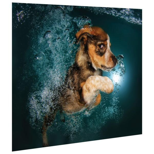 Foxhound Pup ~ Tempered Art Glass - Cece & Me - Home and Gifts