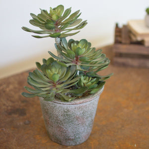 Large Succulent In A Pot - Cece & Me - Home and Gifts