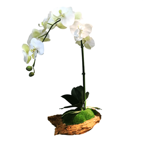 Luxury Faux Orchid in Manzanita Bowl - Cece & Me - Home and Gifts