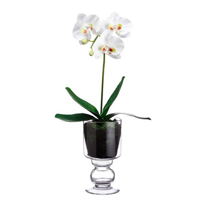 Phalaenopsis Plant in Glass Vase ~ White - Cece & Me - Home and Gifts