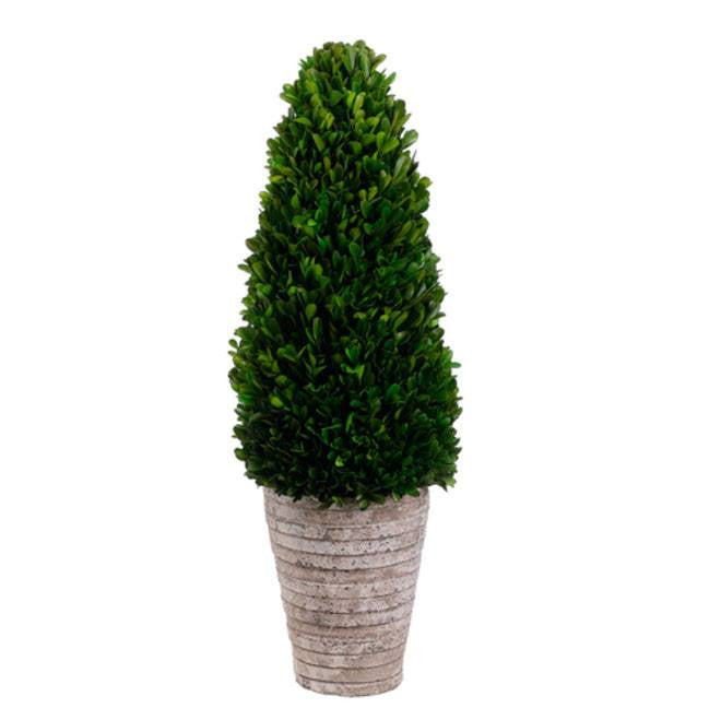 Preserved Boxwood Cone Topiary in Cement Pot Green - Cece & Me - Home and Gifts