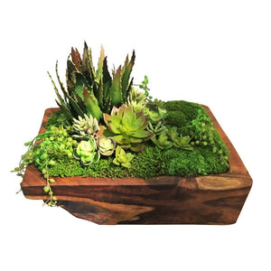 Succulent Teak Bowl - Cece & Me - Home and Gifts