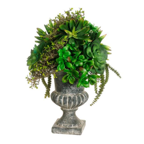 Succulents In Urn - Cece & Me - Home and Gifts