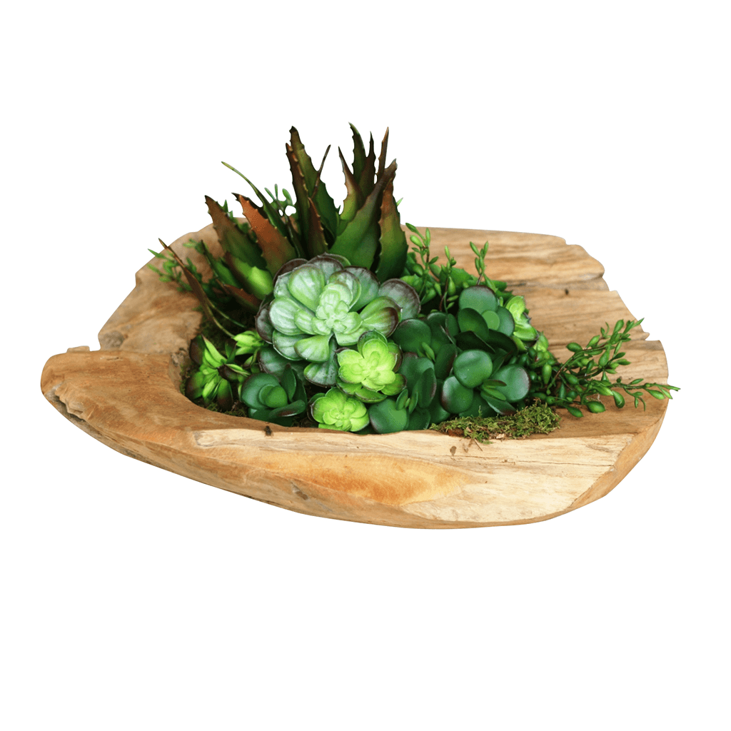 Teak Bowl Succulent - Cece & Me - Home and Gifts