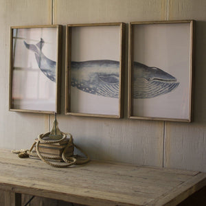 Triptych Framed Whale Print Under Glass - Cece & Me - Home and Gifts