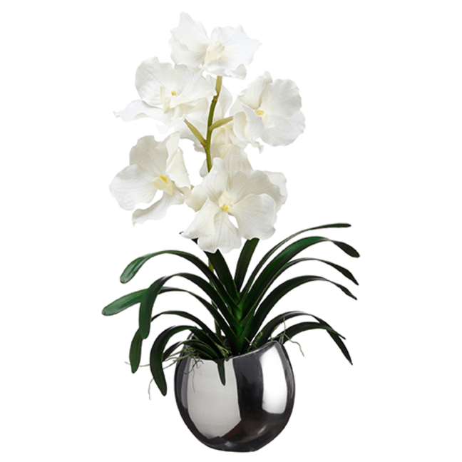 Vanda Orchid in Half Moon Vase ~ White - Cece & Me - Home and Gifts