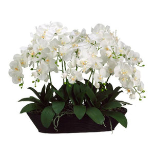 White Phalaenopsis Orchid in Oval Container - Cece & Me - Home and Gifts