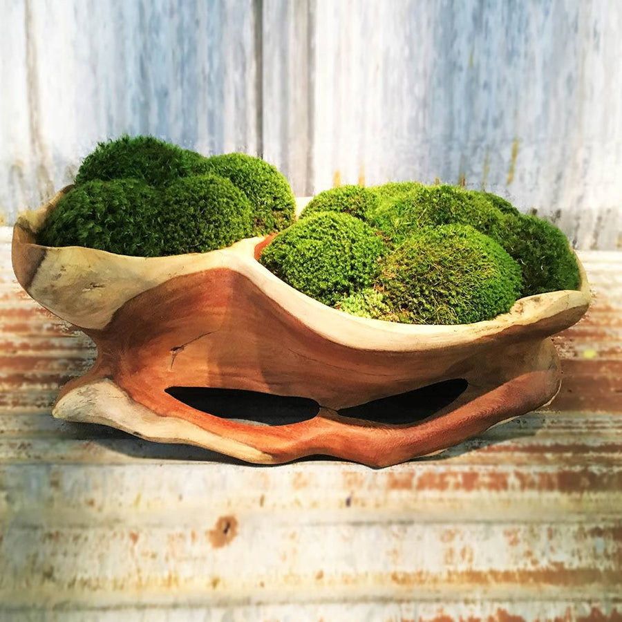 Moss Teak Bowl - Cece & Me - Home and Gifts
