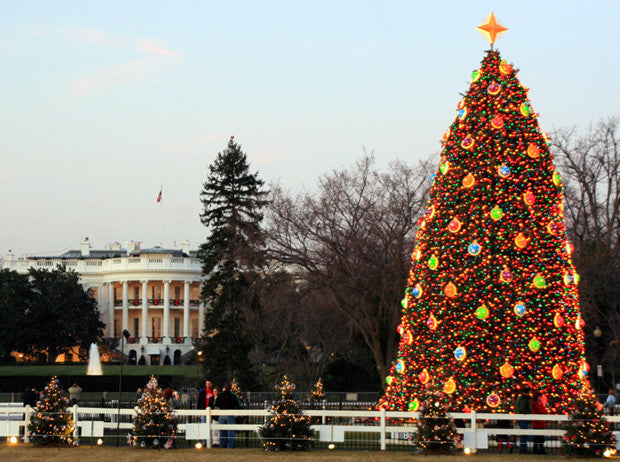 See How the National Christmas Tree Has Changed In The Past 10 Years!