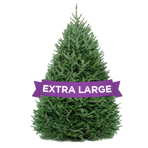 DC Christmas Tree Delivery- Extra Large Christmas Tree Delivery