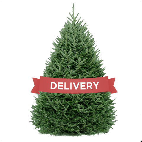DC Christmas Tree Delivery and Disposal- Basic Christmas Tree Delivery