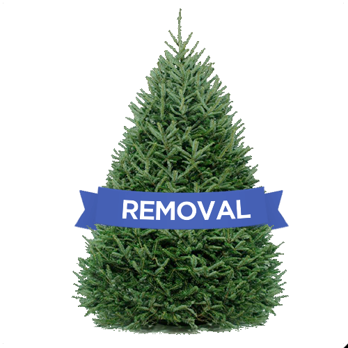 DC Christmas Tree Delivery and Disposal- End of Season Christmas Tree Removal