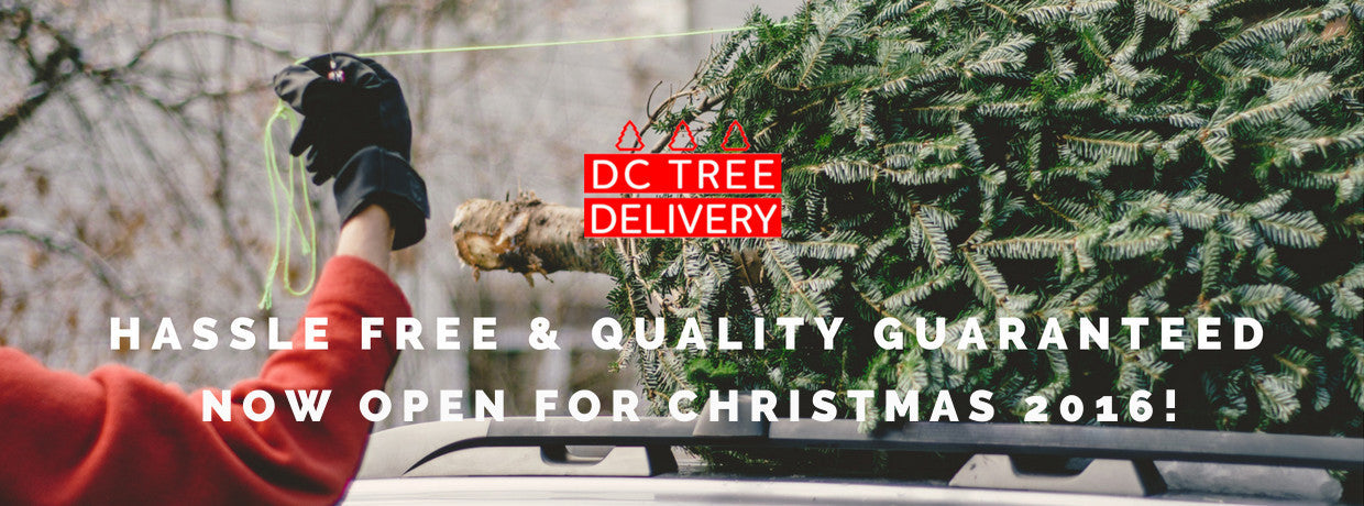 DC Christmas Tree Delivery