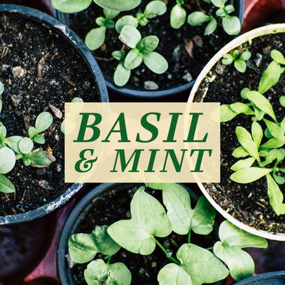 Limited Edition: Country Garden: Basil & Mint 16 oz Ball Jar