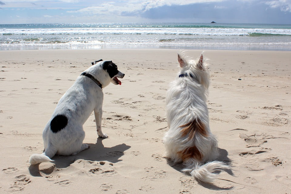 7 Ways to Keep Your Pets Safe During Summer