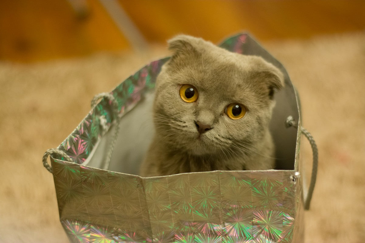 Cat Carriers - How to Choose the Perfect Carrier For Your Cat