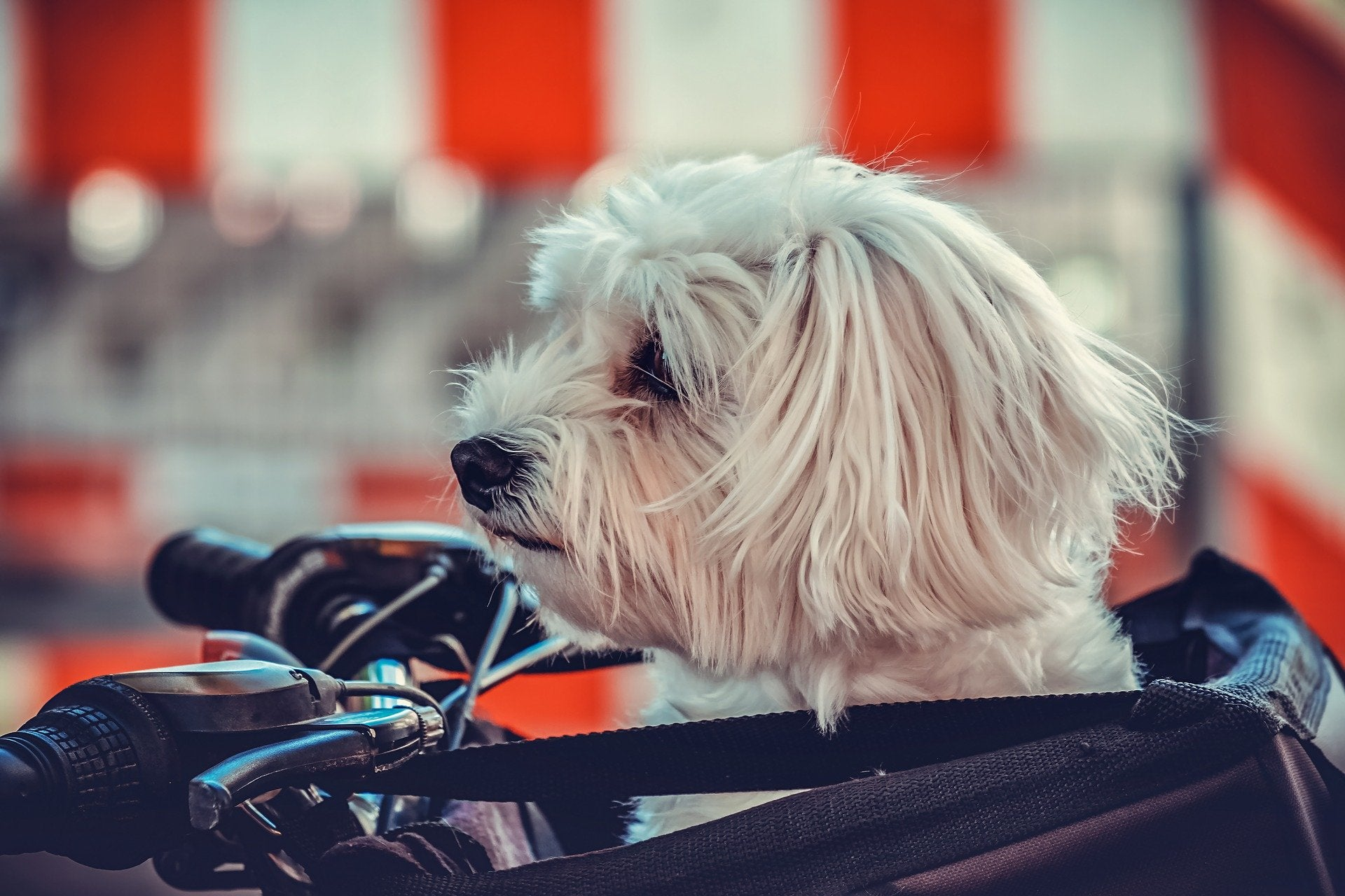 How to Choose the Best Pet Carrier