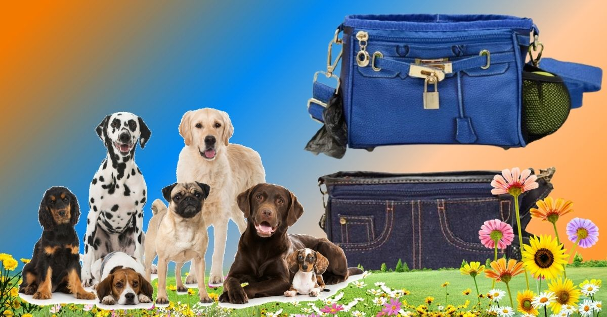 How to Choose the Best Training Treat Bag For Your Dog