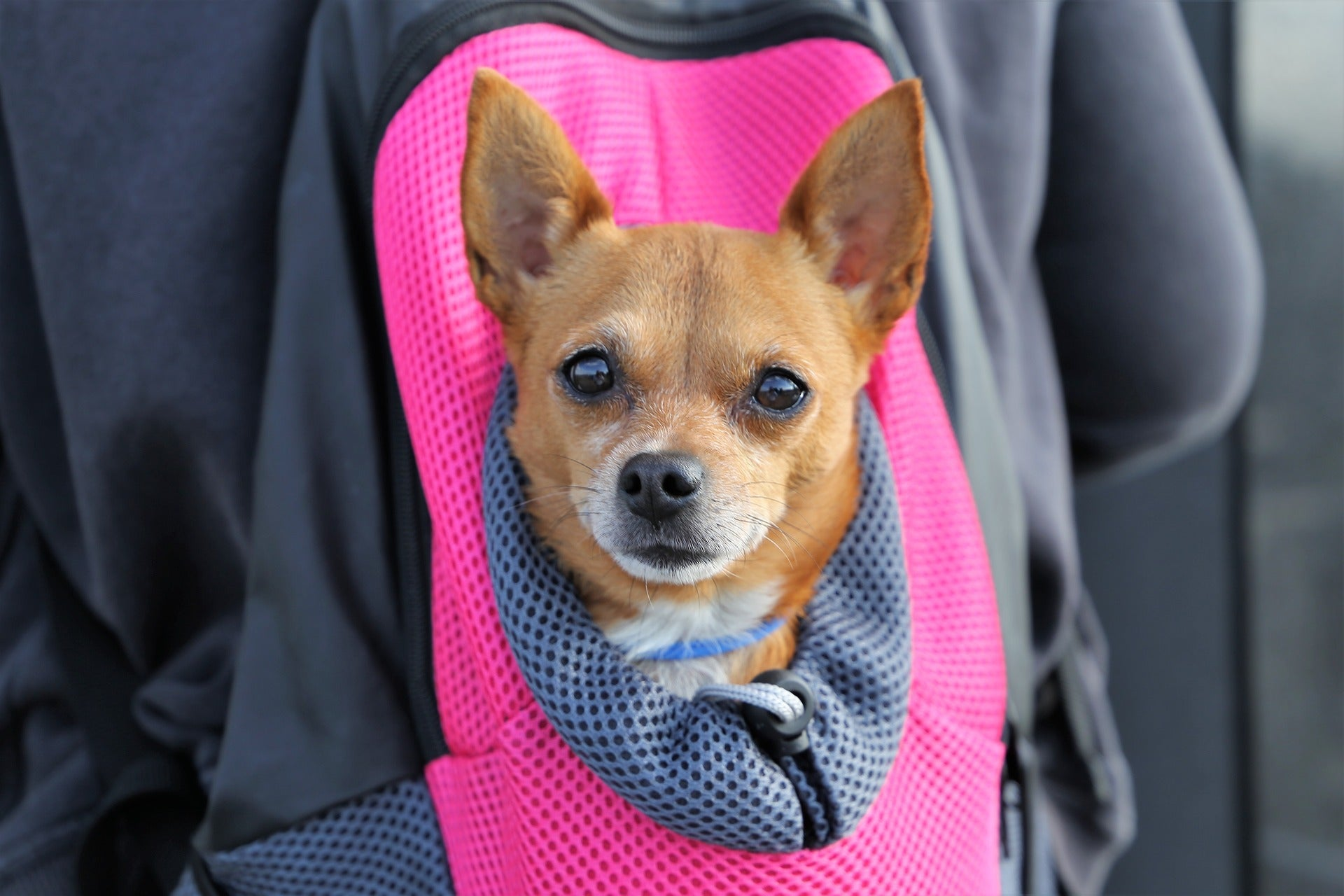Best Pet Travel Accessories for Cats and Dogs