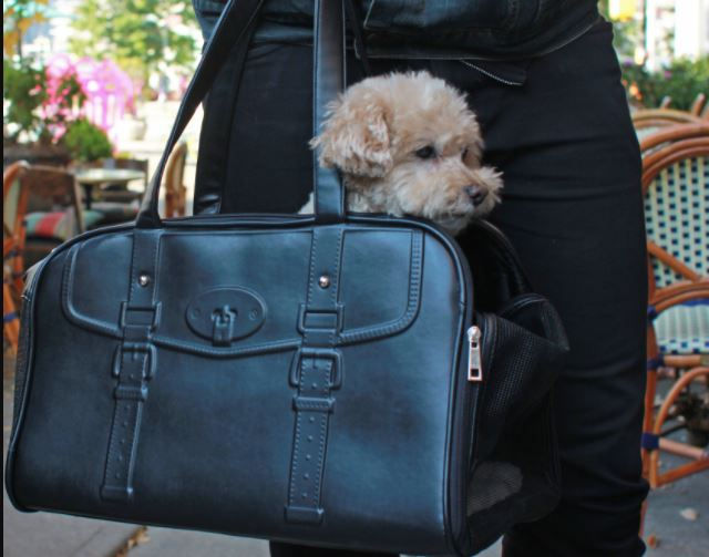 Best Pet Carrier | Is Luxury Pet Carrier a New Fashion?
