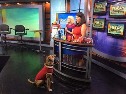 "Fox Baltimore ""Celebrate Your Furry Valentine"""