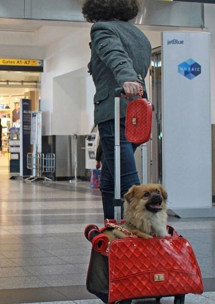 A pet carrier at the airport