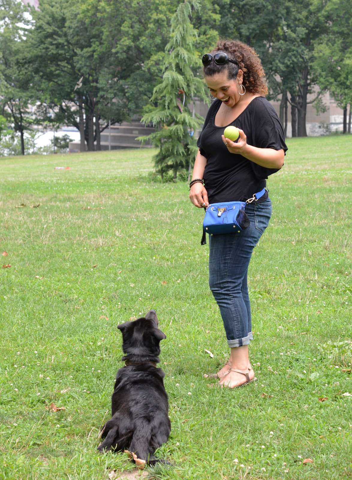 Training bag for dogs