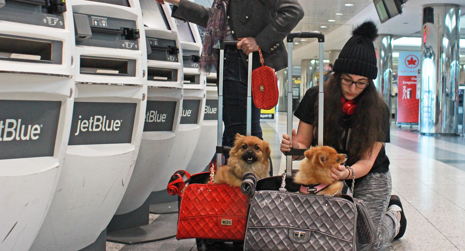 Dog Carrier at the airport