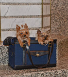 2 cute dogs in Pippa pet carrier