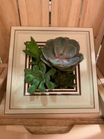 Photo Frame Succulents