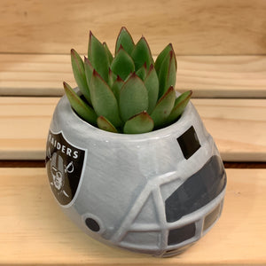 Oakland Raiders Succulent Planter
