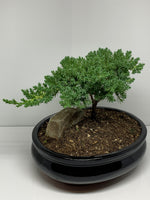 The BONSAI