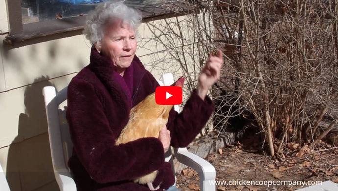 Mrs. Donna's Story About Chickens
