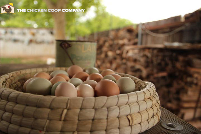 Nesting Basket - the Chicken Coop Company