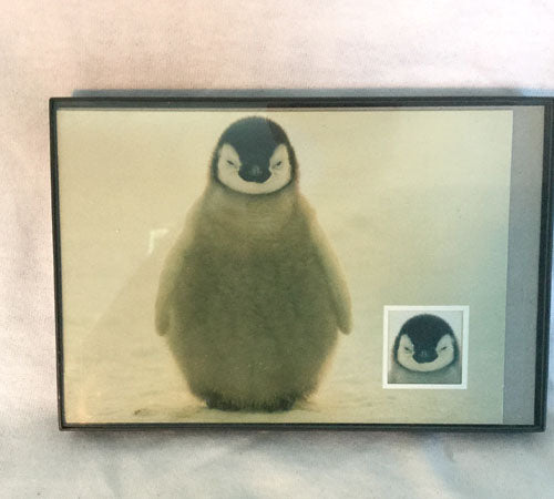 "Framed Penguin Chick Picture (5"" x 7"")"